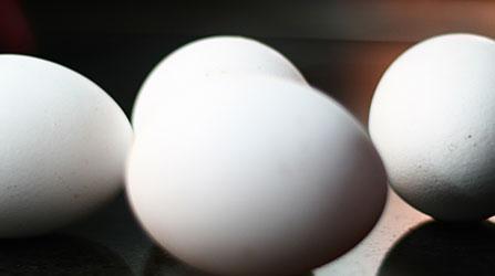 Ovos branco