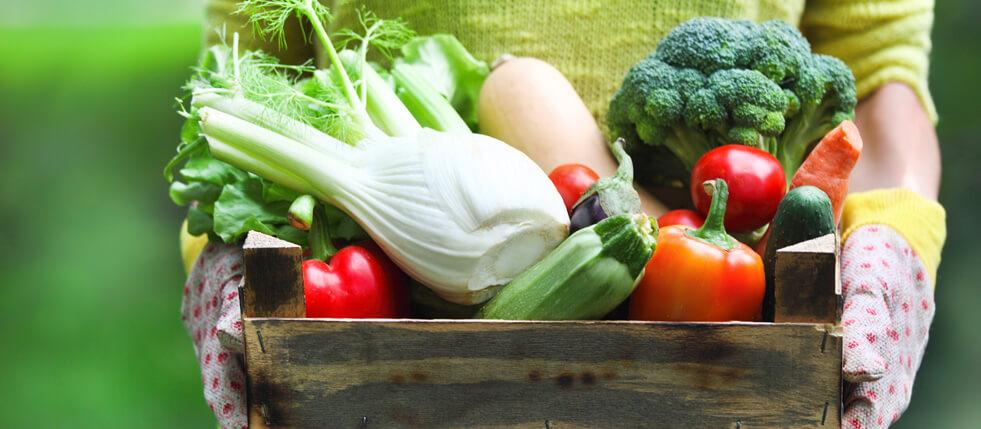 verduras_sacolao_real_belo_horinte